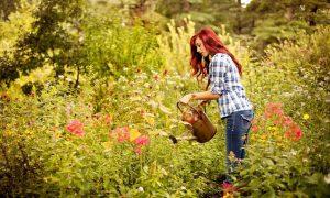 mindfullness-garden