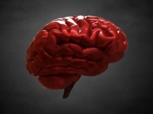 why_the_blood_brain_barrier_matters